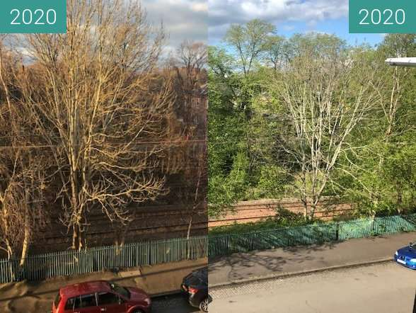 Before-and-after picture of Spring arriving in Pollokshields between 2020-Mar-29 and 2020-May-02