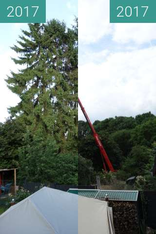 Before-and-after picture of Bäume gefällt between 2017-Jun-16 and 2017-Jun-16