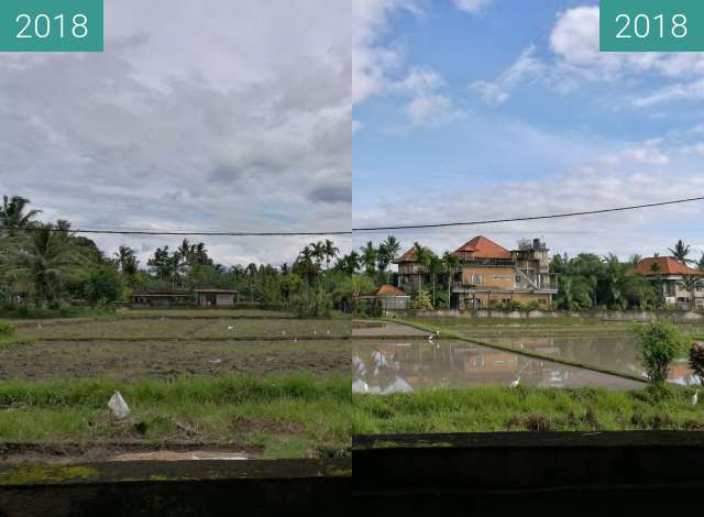 Before-and-after picture of Flooded Rice Paddy Fields in Ubud between 2018-Jan-26 and 2018-Feb-02